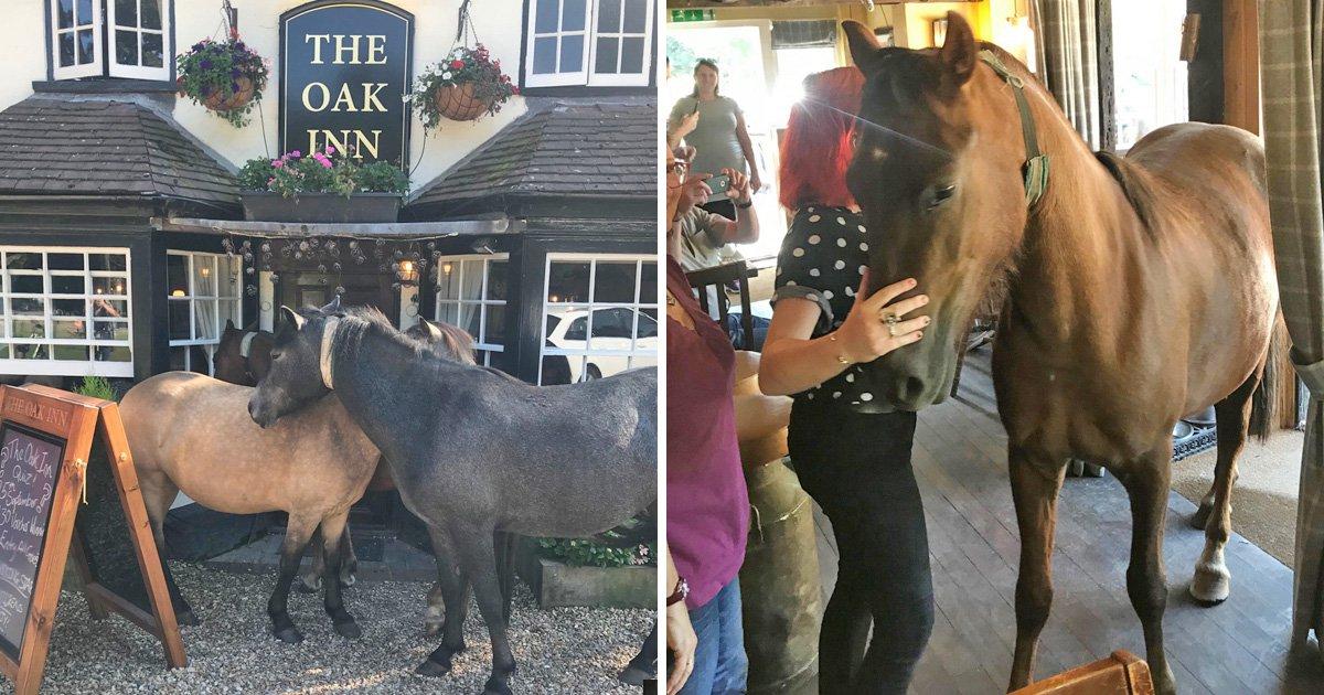 A horse walks into a bar…