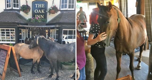Horse walks into a bar