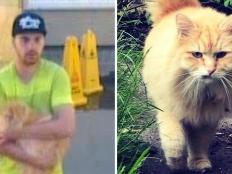 Man suspected of stealing cat from outside owners' home and fleeing on train