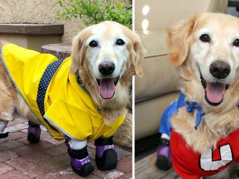 Dog who lost her legs after being thrown in the trash could be America's most heroic dog