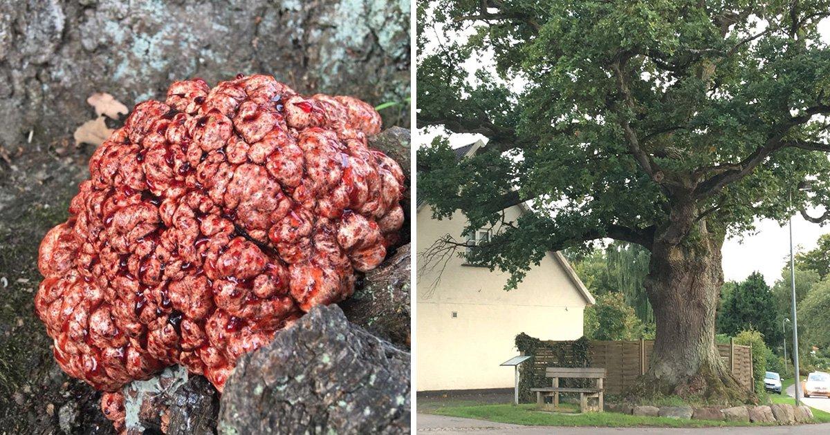 Dog walker spots tree which looks like it's 'growing a blood-soaked brain'