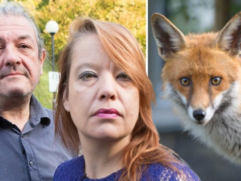 Hunt for 'Croydon cat killer' continues as animal lovers deny foxes did it