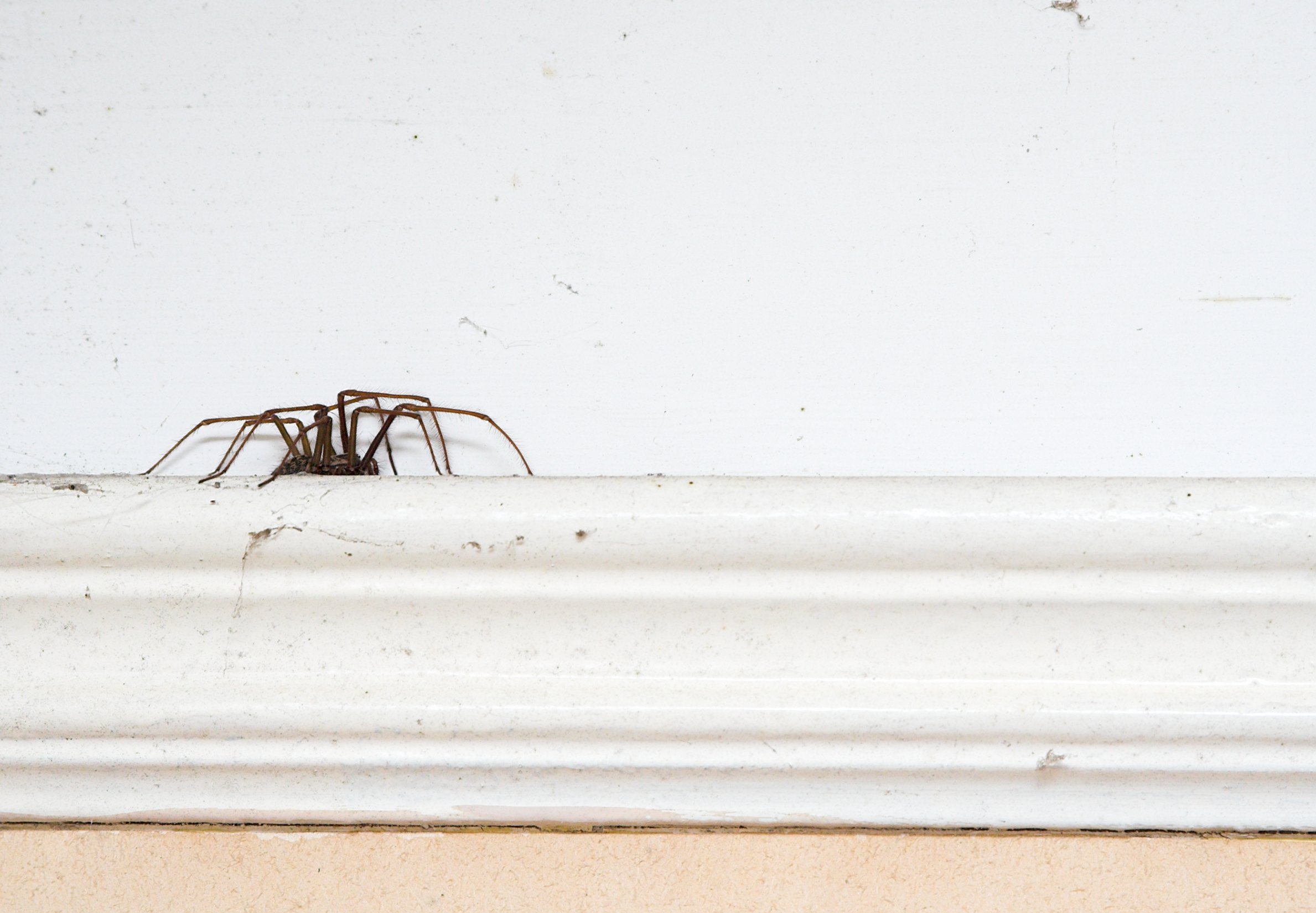 Study pinpoints exactly when you'll see spiders in your house this autumn