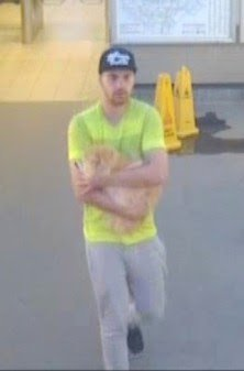 CCTV image of a man suspected of stealing a Siberian Forest Cat, callled Mr. Muk, from a garden in Islington, North London. July 30 2018. See story NNCAT. Police are hunting a prowling thief who snatched a cat from a front garden - and ran away. Met Police have issued pictures of a suspect, wearing a bright yellow t-shirt, walking away cradling the large ginger cat. The Siberian Forest cat, called Mr Muk, was nabbed from a garden in posh Islington, north London, on July 30. Cops say the suspect and the cat were last seen at Canonbury Station between at around 8:45pm, when the suspect has then boarded a London Overground train with the ginger ball of fluff.