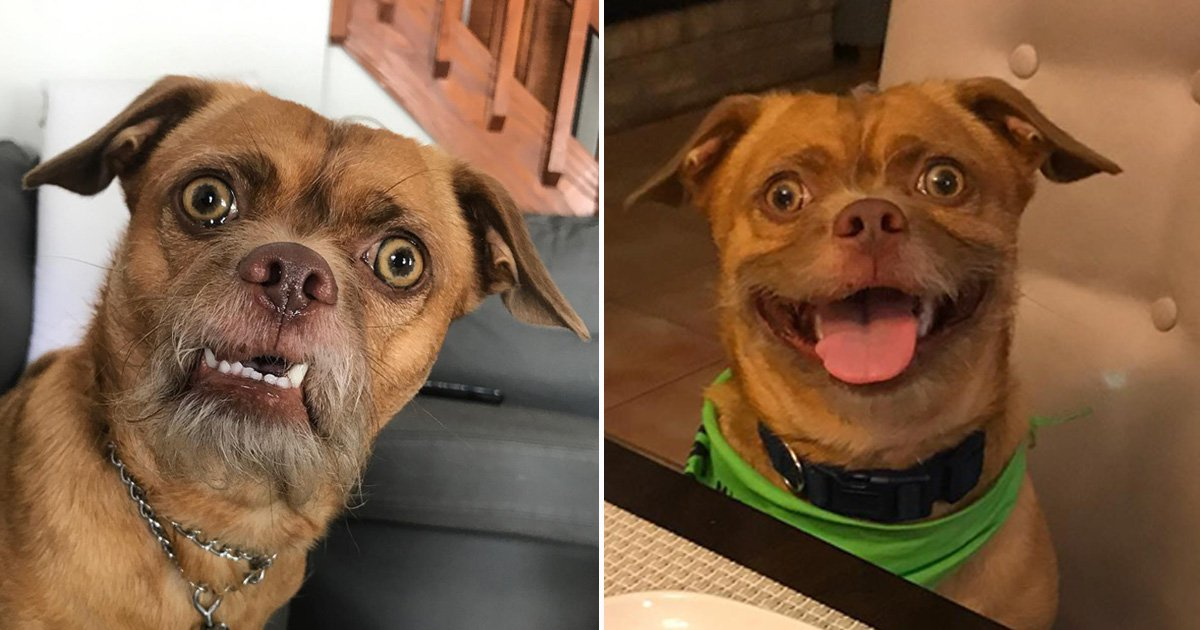 Rescue dog with an incredibly expressive face is now an Instagram star