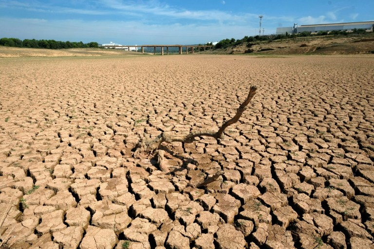 The remains of a dead tree are pictured at the almost empty Maria Cristina water reservoir during a severe drought near Castellon