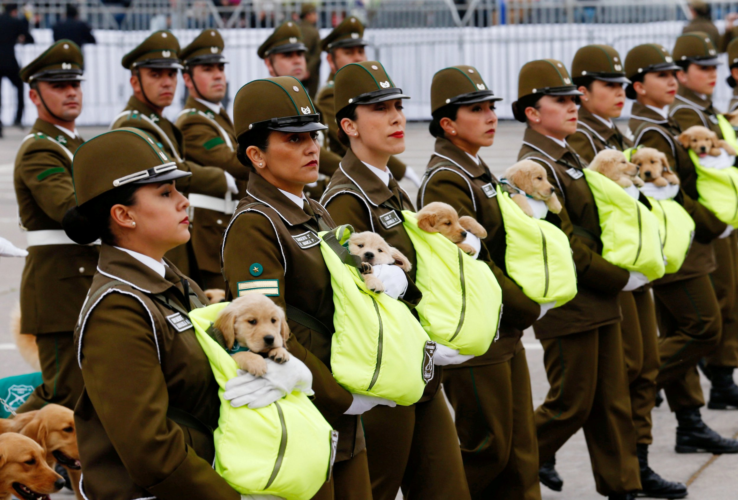 Snuggly police pups in their pouches at the Chilean military parade. (Picture: Rodrigo Garrido/Reuters)