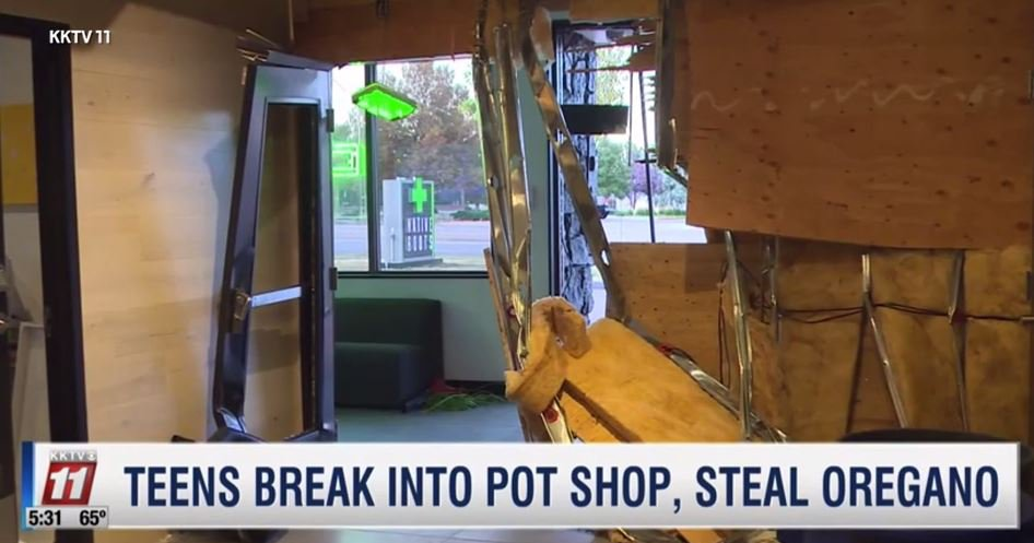Smash & grab thieves steal loads of oregano from weed shop because 'in our display cases, we don't put actual product in them' KKTV 11