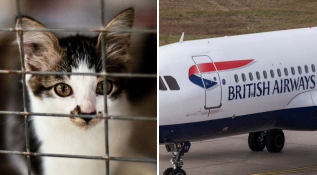 BA passenger kicked off plane after trying to smuggle 'comfort cat' in hand luggage
