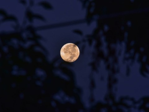 A rare Harvest Moon is appearing tonight, Friday the 13th