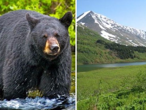Hunter suffers life-threatening injuries after bear he shot falls on top of him