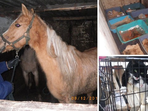 Horses, cats and dogs kept in '18th century conditions' by mother and daughter