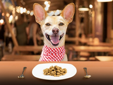 This restaurant is hosting a three-course meal for you and your dog for one day only