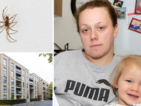 Invasion of venomous spiders causes evacuation of entire block of flats