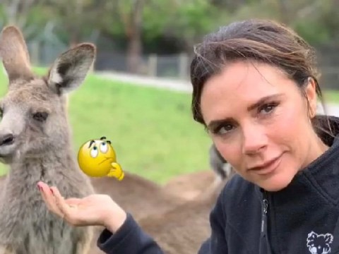 Victoria Beckham cracks a rare smile for the kangaroos during family trip Down Under