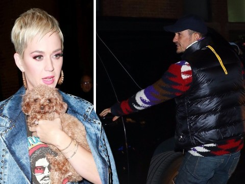 Katy Perry is joined by Orlando Bloom and their adorable dogs at American Idol auditions