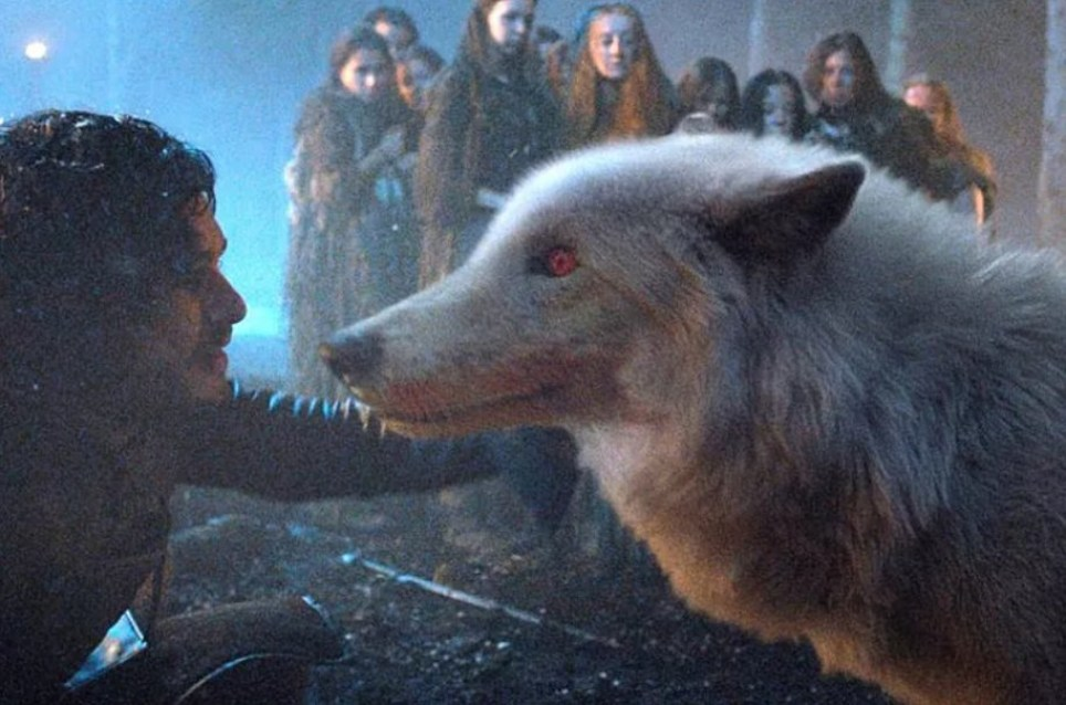 Game of Thrones' Jon Snow will be reunited with Direwolf Ghost in finale season (Picture: HBO)
