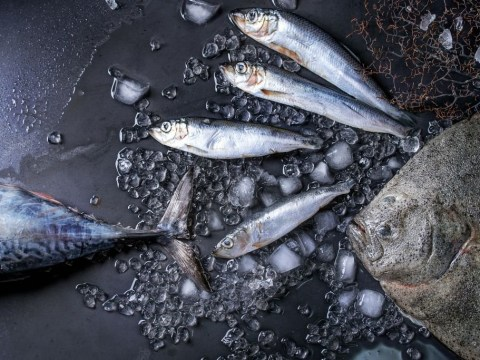 Road covered in herring after incident between a lorry and an elk