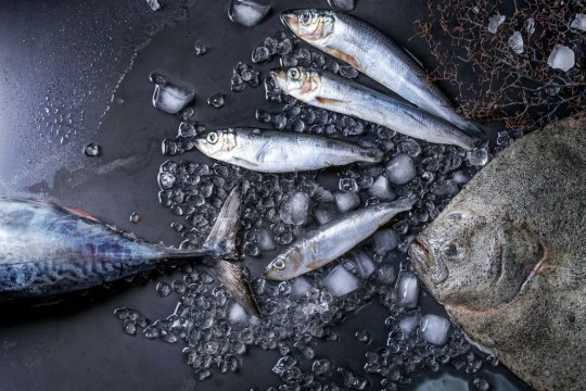 Road covered in herring after elk accident Getty Images