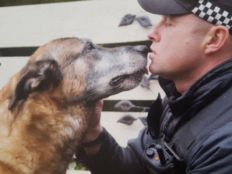 Hero police dog who saved woman's life dies in officer's arms