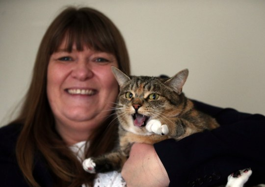 Missy the tabby cat with her owner Angela Tinning. Missy detected Angela's breast cancer early Credit: NCJ Media