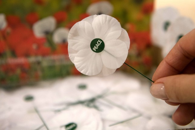 White poppies on sale at the Friends House in London, ahead of Remembrance Day.