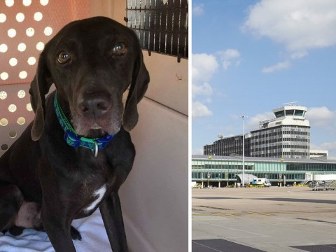 Dog escapes from cargo centre at Manchester Airport