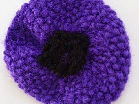 Where can I buy a purple poppy?