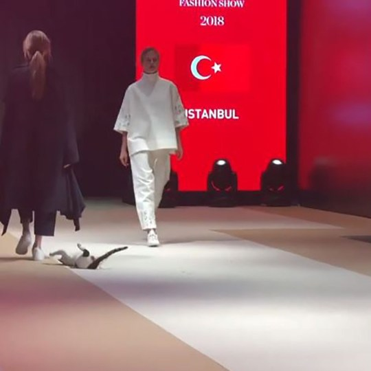 40ce509739 METRO GRAB INSTAGRAM Actual Cat Walks the Catwalk in Turkey and Paws at the  Models https