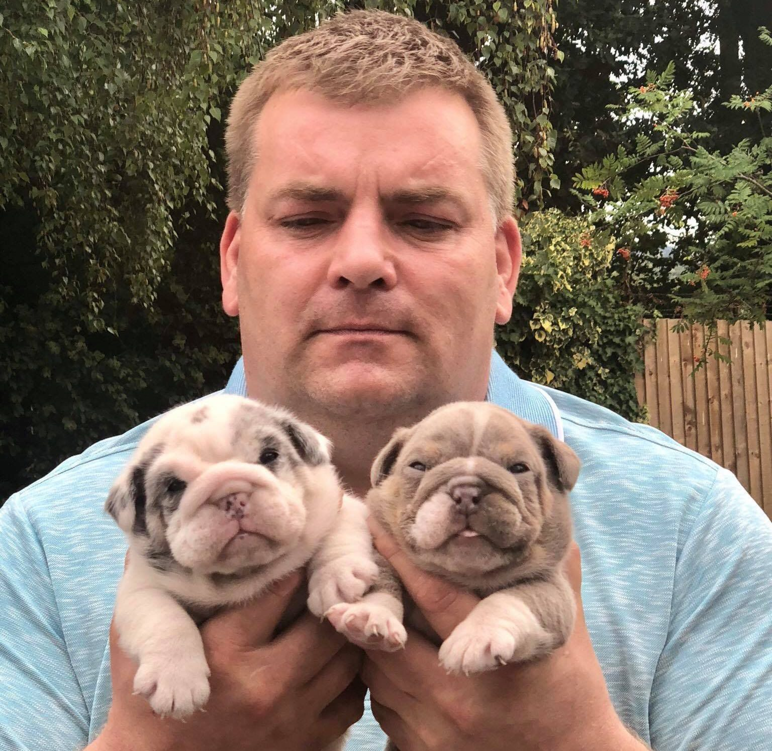 - Picture of Mark Orley, TRIANGLE NEWS 0203 176 0089 // contact@trianglenews.co.uk By Kaisha Langton THE owner of eleven stolen puppies has taken to social media to offer ?50,000 to anyone who can name the thieves who snatched them. Mark Orley decided to take the law into his own hands after someone nabbed the pups. He claims his kids were held at knifepoint in the process - and offered ?50k to anyone who helps identify those responsible. *Full copy available via Triangle News*