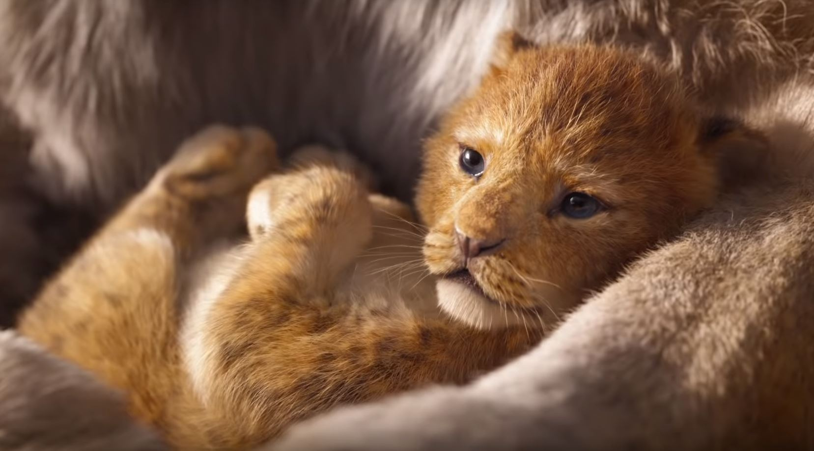 New Lion King is 'a thing of beauty', first look at CinemaCon
