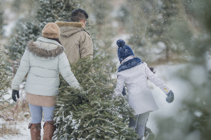 The ethical guide to Christmas trees