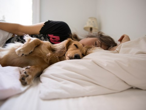 Women sleep better with a dog in the bed, researchers say