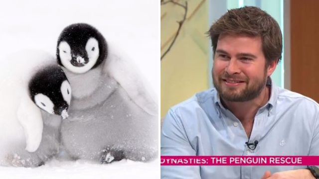 Dynasties director says breaking David Attenborough's rule to save penguins 'was not a straight forward decision'