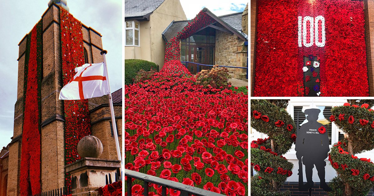 Britain turns into sea of red poppies as country prepares for 100th year since end of WWI