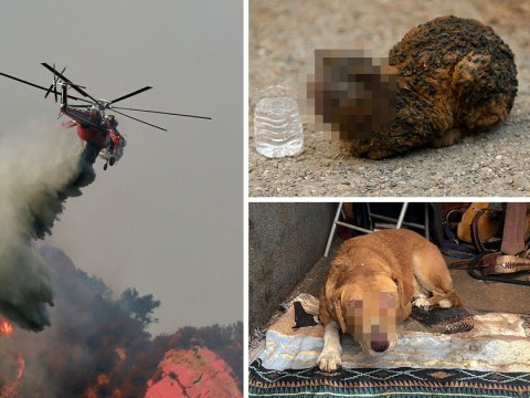 Harrowing photos show animals burnt alive by California wildfires