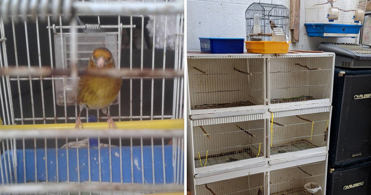 Man trapped wild birds using glue and put them in cages just like Mr Twit