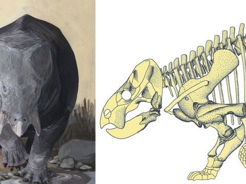 An elephant-sized mammal walked among the dinosaurs, claim scientists