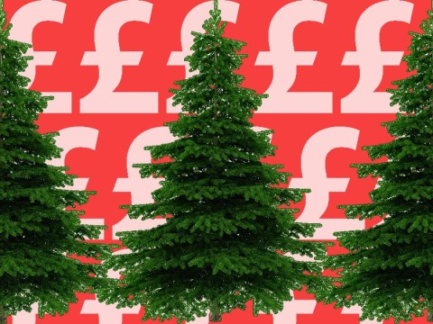What should you be paying for your Christmas tree?