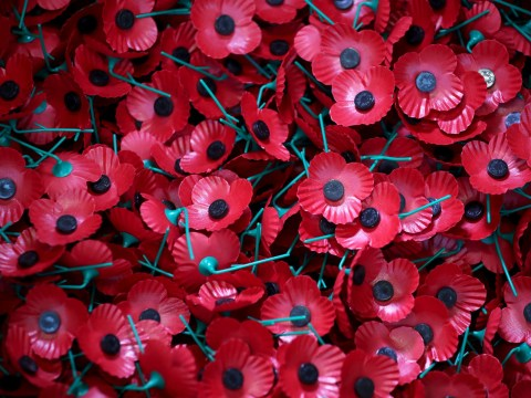 More than 1,700 'fake' Remembrance Day poppies seized in Manchester