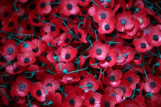 Assembled poppies ready to be dispatched as final preparations are made ahead of this year's PoppyScotland Appeal and Remembrance Day at the Lady Haig's Poppy Factory in Edinburgh.