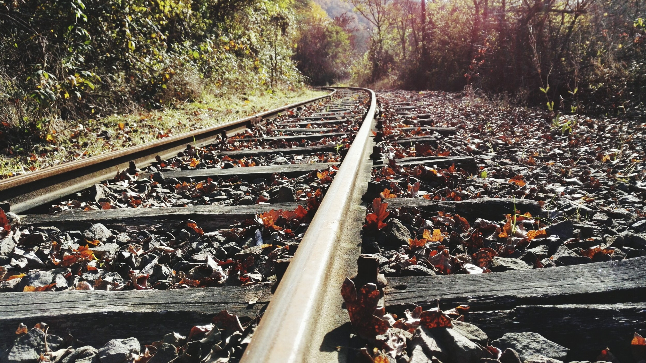 Just why are leaves on the line ruining your train journey?