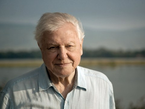 David Attenborough gunning for Christmas number one after X Factor's early finish