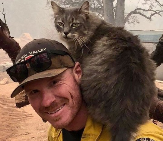 Picture: Ryan Coleman Cat won't leave fireman alone after he rescued it