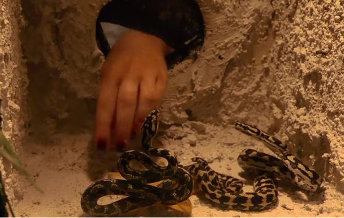 I'm A Celebrity's Emily Atack bitten by snake in first Bushtucker trial CREDIT :ITV