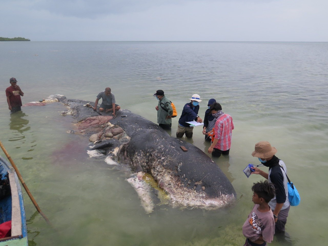 A stranded whale with plastic in his belly is seen in Wakatobi, Southeast Sulawesi, Indonesia, November 19, 2018 in this picture obtained from social media. KARTIKA SUMOLANG/via REUTERS THIS IMAGE HAS BEEN SUPPLIED BY A THIRD PARTY. MANDATORY CREDIT.
