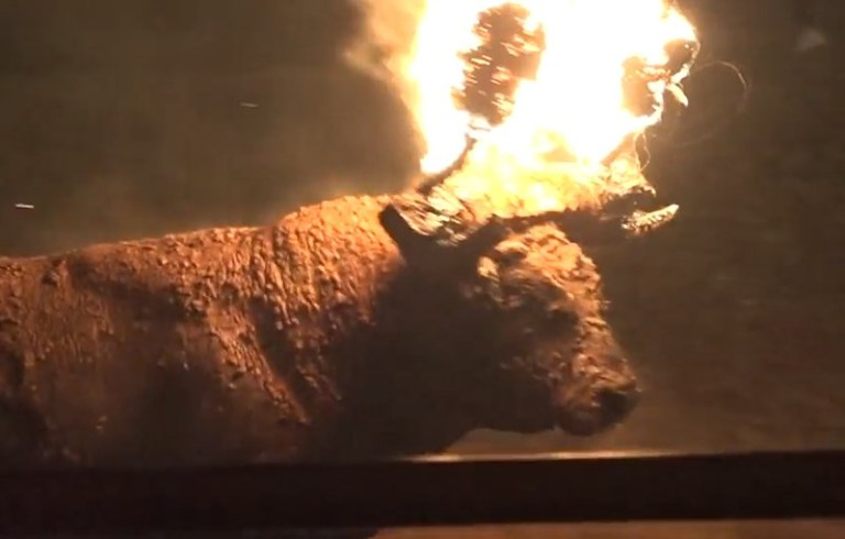 Bull set on fire by locals during Spanish festival | Metro News