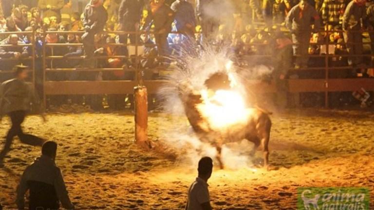 'Toro de Jubilo' Fire Bull Festival in Medinaceli (Picture: AnimaNaturalis)