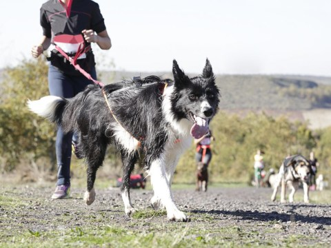 Canicross is the new fitness craze that lets you work out with your dog