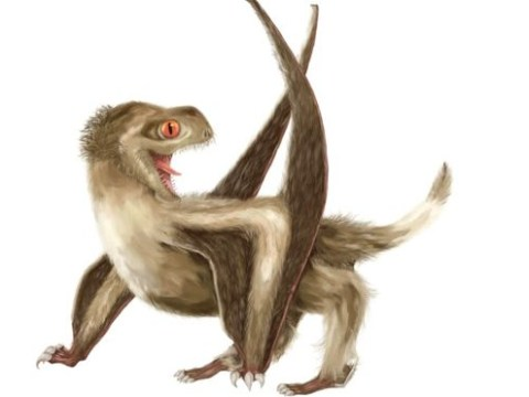 Dinosaurs actually had feathers much earlier than we first thought, claim scientists